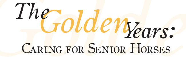 The Golden Years: Caring for Senior Horses - image banner