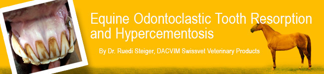 Equine Odontoclastic Tooth Resorption and Hypercementosis - image banner